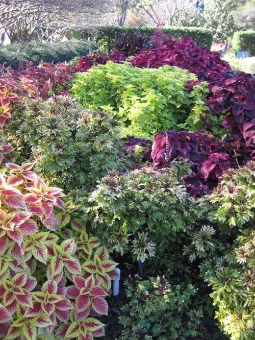 arboretum1